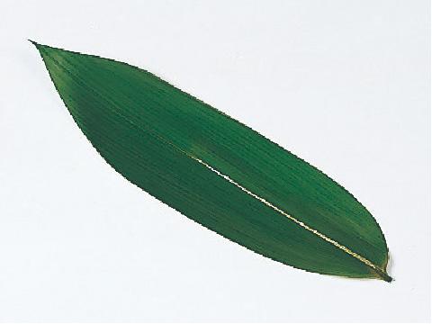笹葉(枝なし)
